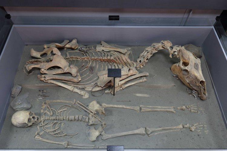 Реконструкция тюркского погребения. VI-VII вв. Археологический музеи Алтайского государственного университета