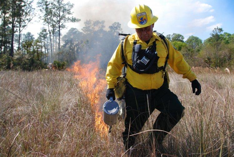 Организация встречного пала для тушения низового лесного пожара