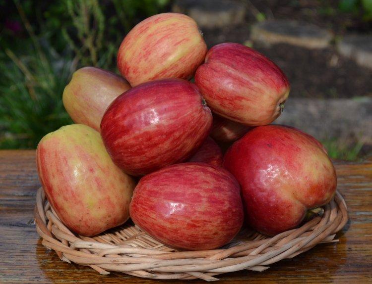 Сорт Сеянец Титовки. Один из первых сортов в Башкирии, оригинальный, с зимним сроком потребления плодов.